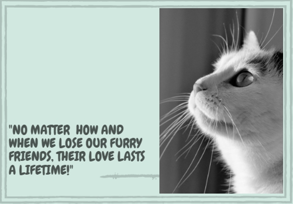 12 Sympathetic Loss of a Pet Quotes - TheSympathyQuotes.com